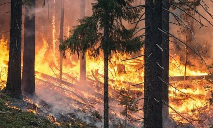 Pożary trawią Polskę. Co jest ich przyczyną?