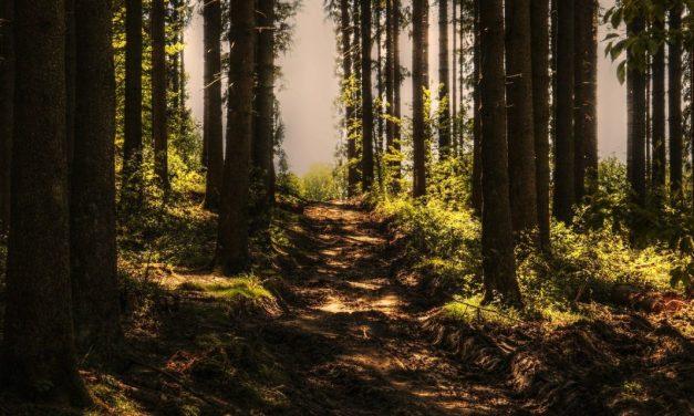 Fakenewsy natemat Bieszczadzkiego Parku Narodowego. Apel dośrodowiska turystycznego