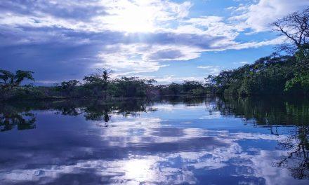Amazonia płucami planety?