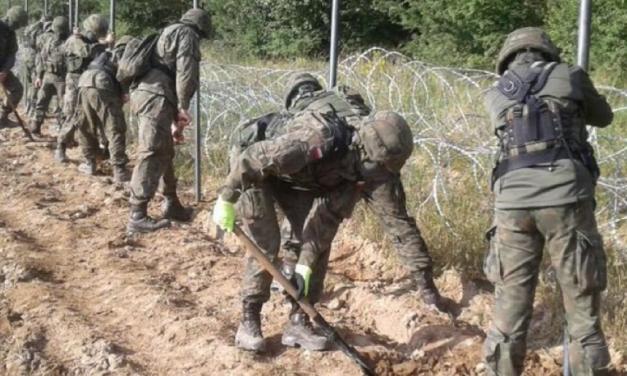 Jeleń zabity przezpłot przy granicy Polski zBiałorusią? Sprawdzamy