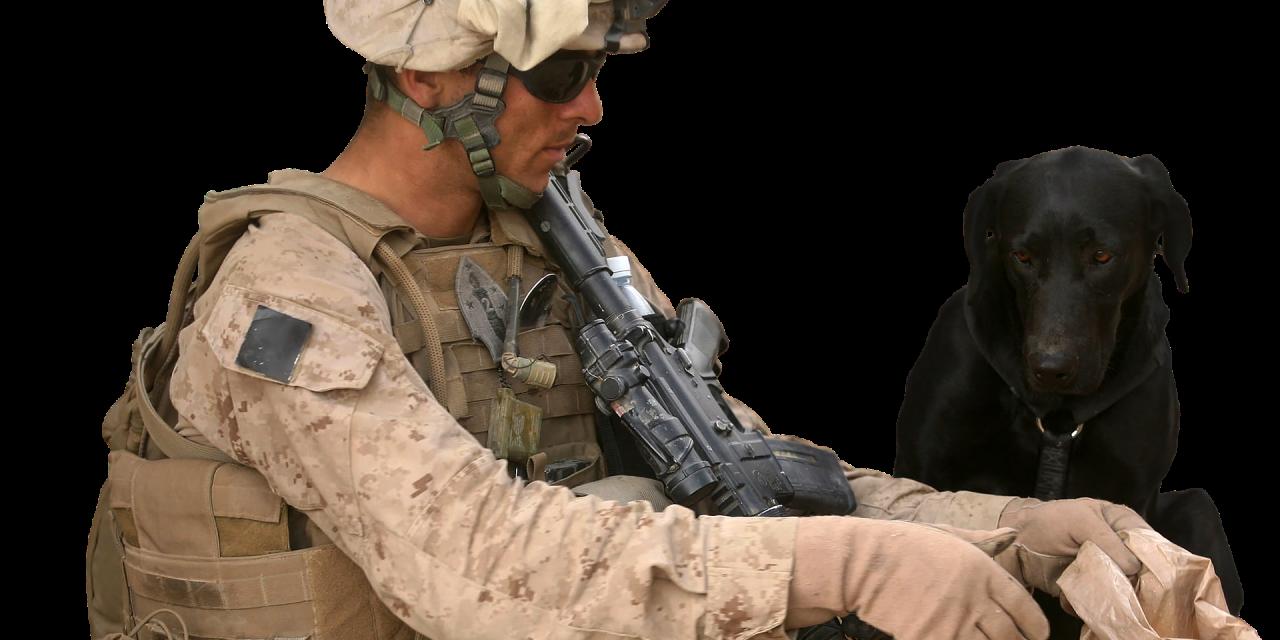 Amerykanie zostawili wojskowe psy napastwę Talibów? Sprawdzamy
